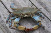 En crabe pour les débutants