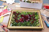 Peinture de vie issu de plantes succulentes