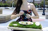 Plateau déjeuner herbe