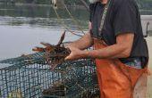 Comment de homard