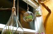 Branche - pendaison de Terrarium en direct