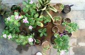 Recycler, réutiliser, jardinage