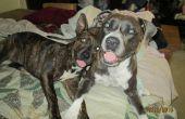Remède naturel pour chiens & puces