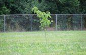 Guerilla Gardening : Un Guide de base