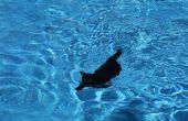 Comment apprendre à un chat à la nage.
