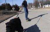 Skatejoring avec des chiens