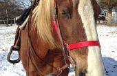 Comment exercer votre cheval avec gestion du temps