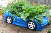 Course de voiture Veggie Box