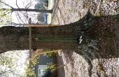 Barre de traction sur un arbre sans branches