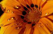 Photographier les fleurs et plantes
