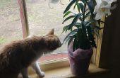 CURE Lily empoisonnement chez les chats (à la maison!)