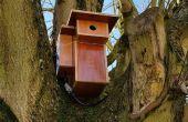 Framboise avec cam dans la cabane d'oiseaux