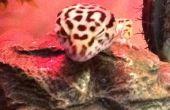 Laisse de Gecko avec harnais