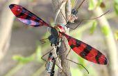 Insecte électromécanique ou oscillateur de battement