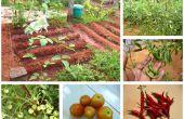 Un petit potager dans votre jardin de plus en plus
