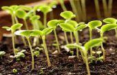 Comment faire pousser des plants