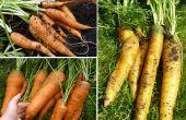 Comment cultiver un jardin intérieur