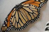 Aile de papillon monarque Walkalong
