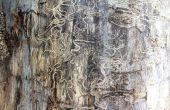 Comment vous pouvez vous débarrasser des Termites dans la barrière en bois