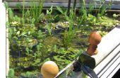 Plantes de bassin sur le bon