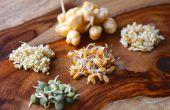 Comment faire germer des graines et fèves
