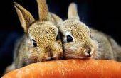 Comment faire pour garder les lapins de manger vos légumes de cultures/jardin.