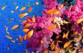 Destruction des récifs est écologique