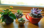 Plantes succulentes dans des récipients de tous les jours