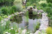 Comment construire un étang de jardin
