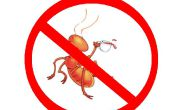 Comment faire pour tuer les fourmis
