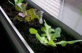 Cultiver des légumes à l'intérieur pendant l'hiver