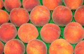 Fresh Peach Cobbler Pie