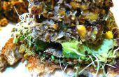 Burgers de Quinoa épicé de Tilapia en croûte aux amandes