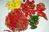 Conserver les piments : Jam, paillettes, poudre