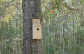 Le contrôle ultime de lutte antiparasitaire - une maison d'oiseau simple !