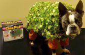 ECHO le Costume de chien de compagnie Chia