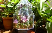 Stained Glass Terrarium : Un week-end projet