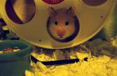 Track How Far votre Hamster s'exécute