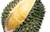 Tout le monde pense comment durian ? Ou quels sont les avantages de manger durian ?