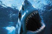 Comment survivre à une attaque de requin