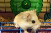 Hamster Hack : Faire taire la bruyante roue - recyclage !