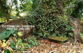 Jardin botanique Safari-photo : Ensacher les meilleurs clichés