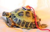 Tortue Tracker (Version analogique)