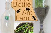 Bouteille de soda Ant Farm