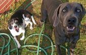 Mentaire d'obéissance pour chiens