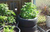Cultiver des pommes de terre en pneus