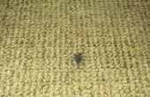 Réparer des brûlures de Cigarette dans les tapis