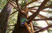 Escalade avec une jupe d'arbre