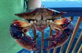 Bases de Puget Sound en crabe