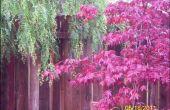 Comment ajouter « Instantanée » *** à votre jardin !
